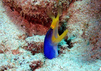 Scuba Diving (10)