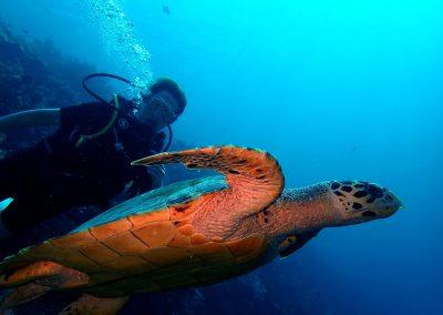 Scuba Diving (8)