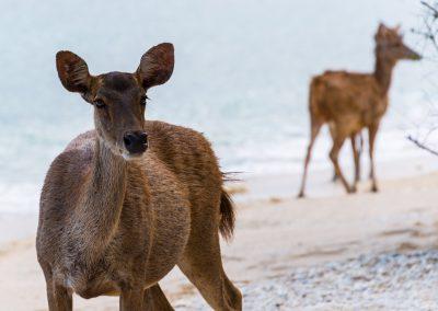 Wildlife NusaBay Menjangan