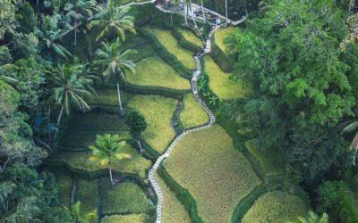 Bali Will Prevail
