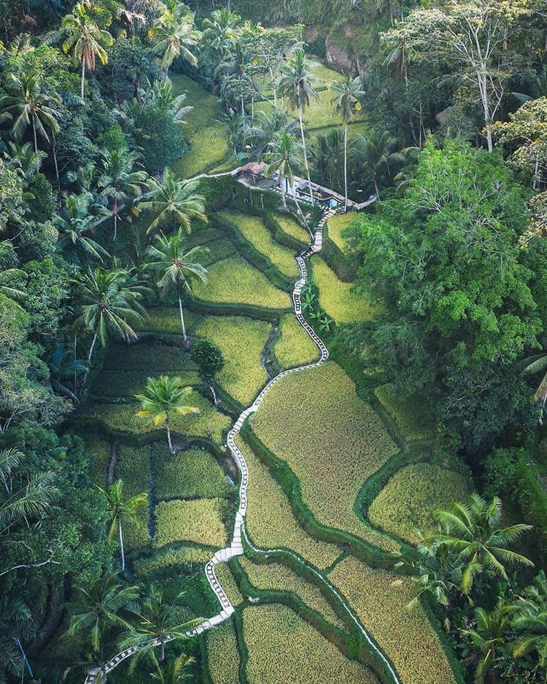 Bali will Prevail - Bali Natures (michaelmatti)